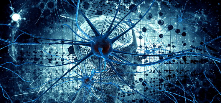 Your brain hardwires itself for improvement at whatever you think most about
